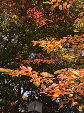 秋頃の写真です。
