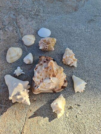Schöne Muscheln am Strand