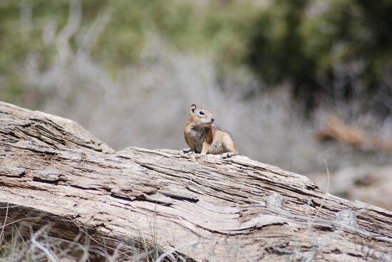 Yosemite National Park, CA: Souvenirs de mes Voyages --- USA -- Californie -- Belle rencontre avec nos amis écureuils .20.12.15