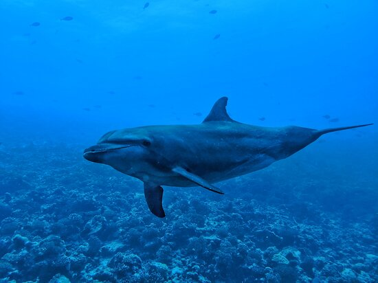 Fun Dive: So many dolphin encounters during our dives!