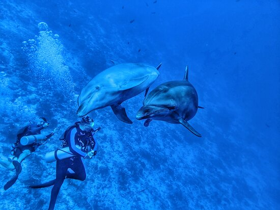 Fun Dive: Friendly Dolphins!