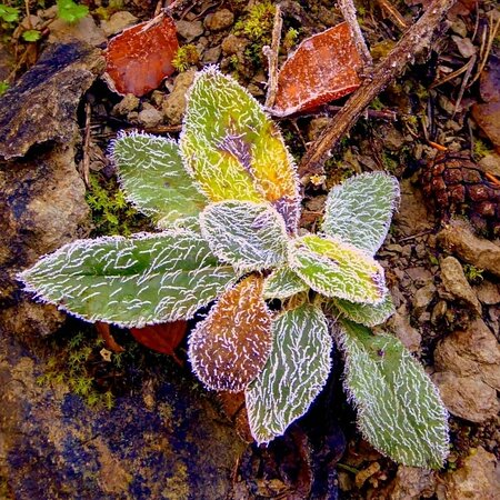 Provincia Girona, Španielsko: Colores de otoño