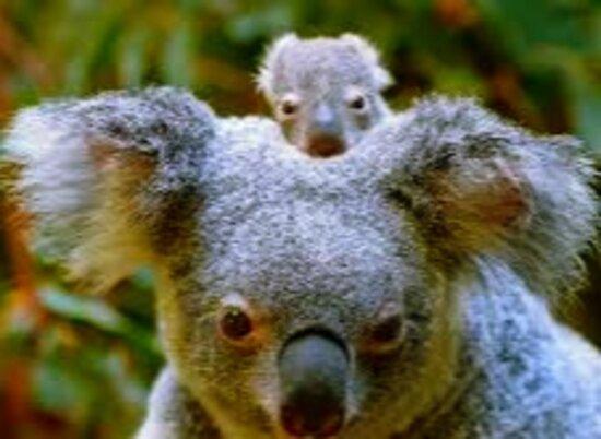 Queensland 16