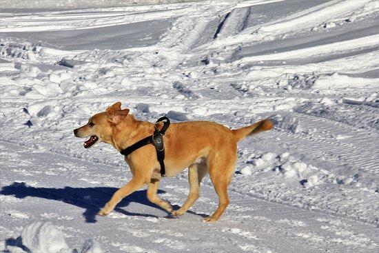 Olivone, Svájc: Felice sulla neve..