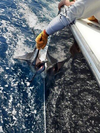 quepos  fishing costa rica