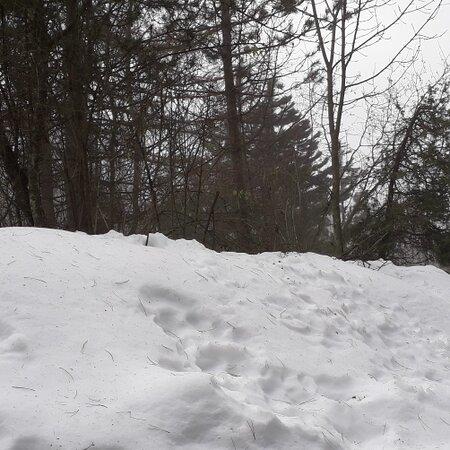 Splendida giornata sulle nevi piacentine