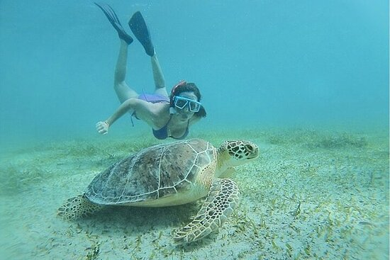 Snorkeling Tour to Vieques Island