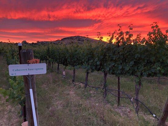 Yakima, واشنطن: Cabernet Sunset