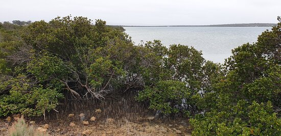 Franklin Harbour Jetty  SA   view from walkway with mangroves in front