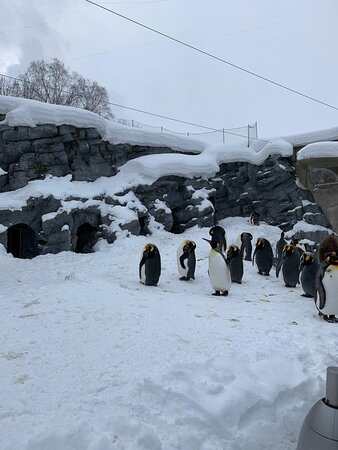 penguin parade ready to show off