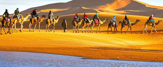 Marrakech, Morocco: Sahara caravan of camels in the way to the top dune for enjoy the sunset