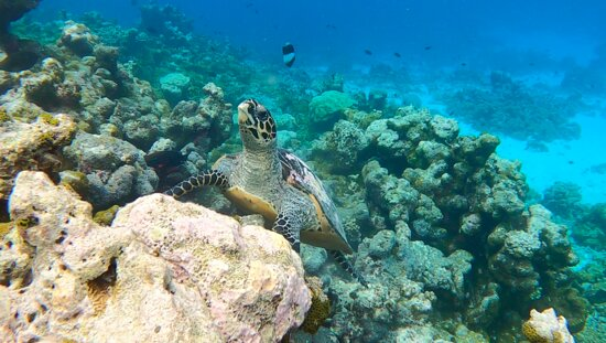 Beautiful and adorable turtles are in plenty!