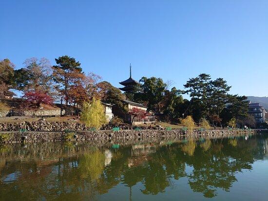 秋の猿沢池
