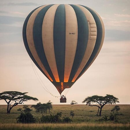 #tanzaniasafaris #wildlifesafaris #sertengetinationalpark #tripadvisory #unitedstates #italyn #unitedkingdom
