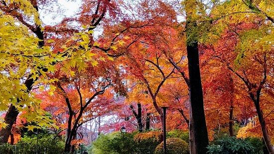鬱蒼としていますが色とりどりの紅葉は綺麗です
