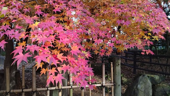 お庭の紅葉