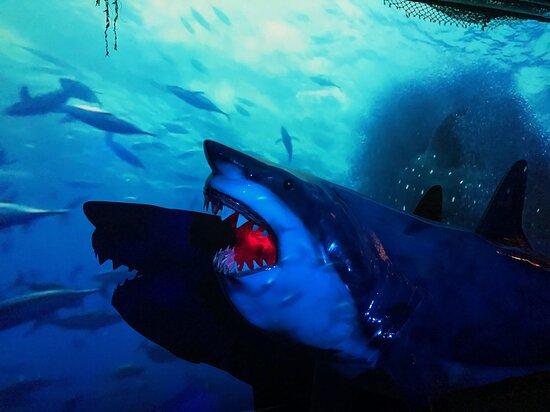 Avila Beach Shark Exhibit