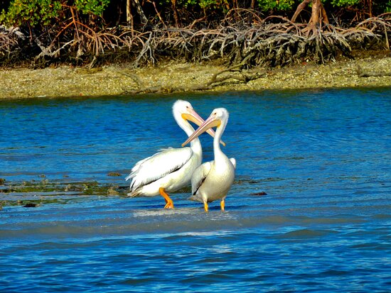 Ten Thousand Islands Boat Tour: Love you more!