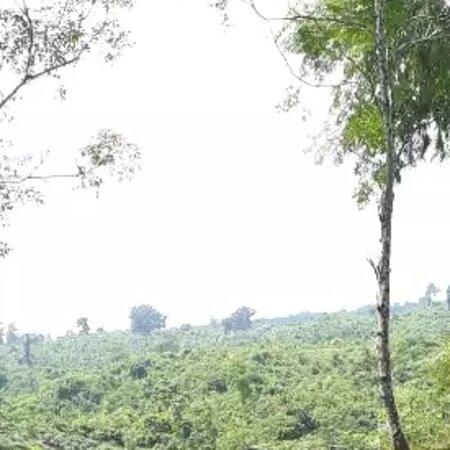 Dhaka City, Bangladesh: sylhet tea garden
