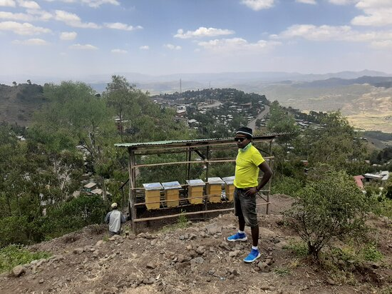 Lalibela Beekeeping, Horticulture and Forestry