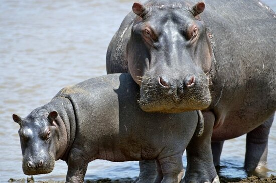 Kilimeru Trek and Safari