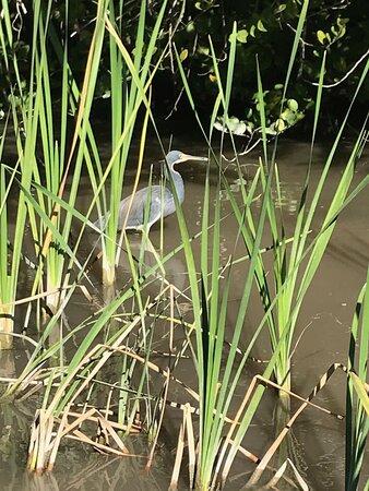 Paseo en hidrodeslizador por los Everglades de Florida y espectáculo de reptiles: Emozionante e divertente