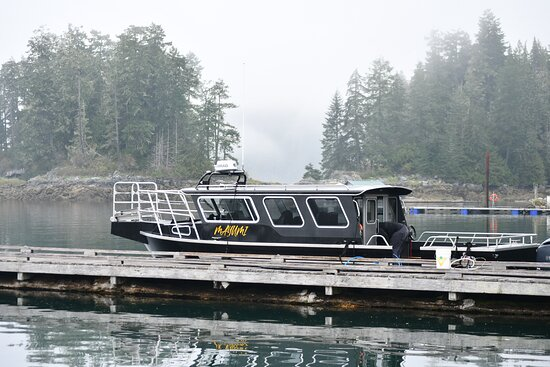 Grizzly Bears Of The Wild: The boat was very comfortable