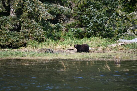 Grizzly Bears Of The Wild: Grizzly