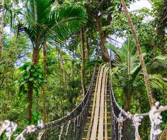 Bouillante, Guadeloupe: canopée