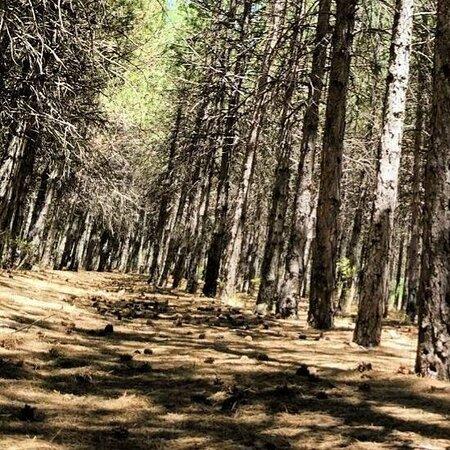 Ahlatlıbel Tesisleri Parkı