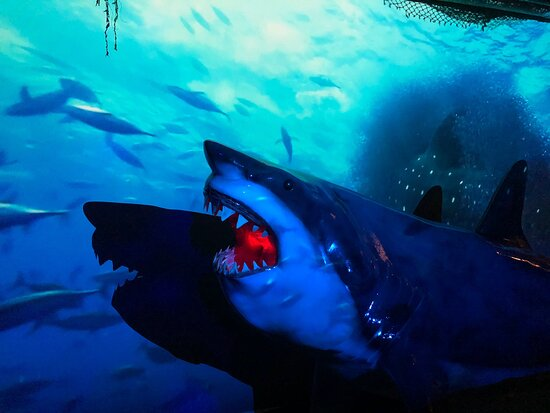 SAN LUIS OBISPO TOURS- SHARK EXHIBIT