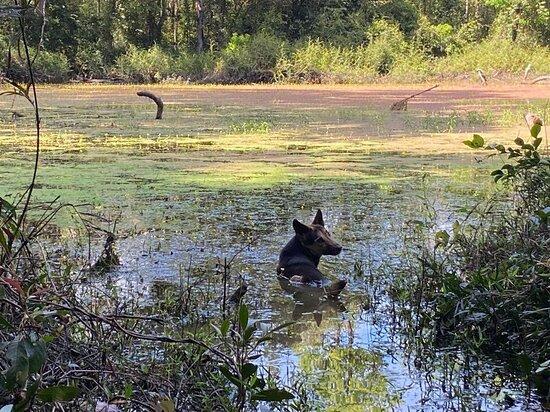 Sdau, Kambodsja: BeTreed's dog
