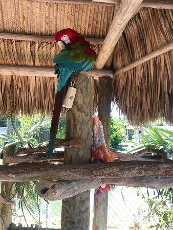 Florida Everglades Airboat Ride and Reptile Show: divertente ed emozionante