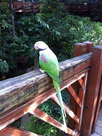 Hồng Kông, Trung Quốc: Papoušek