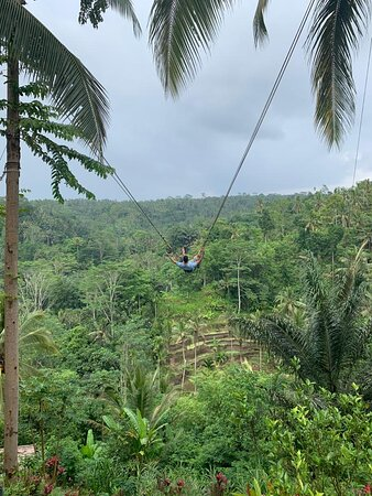 Best of Ubud Tour with Jungle Swing: Jungle Swing