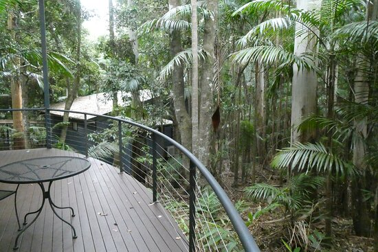 One pleasant pastime for us was to enjoy a drink or two on the verandah of the unit overlooking the rainforest and to have our breakfast there.