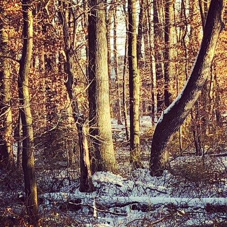 Blackbird State Forest