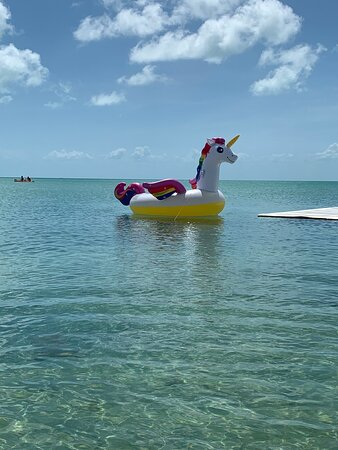 San Pedro, Belize: Relax on Charlie the unicorn!
