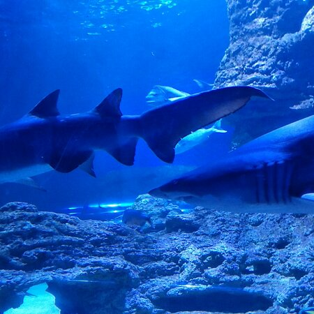Australia Occidental, Australia: Dr Aruna Kondasinghe - Famous Western Australian Underground Aquarium
