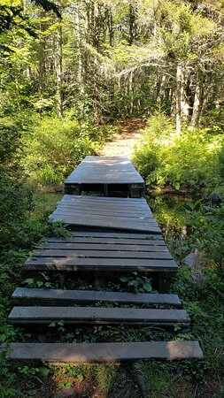 A wooded pathway that takes you along the forested trail.