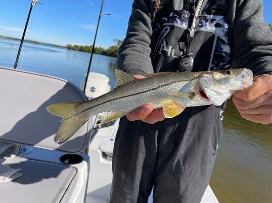 Everglades National Park, Chokoloskee, 10,000 Islands Inshore Fishing Charters: Snook