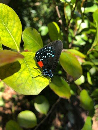 Butterflies like this garden