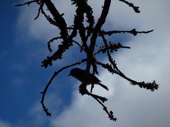 ...a flycatcher bird on a twig