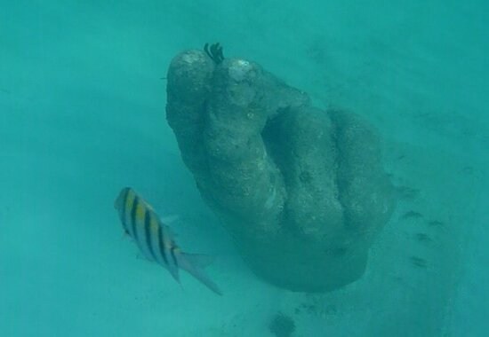 4-in-1 Cancun Snorkeling Tour: Swim with turtles, reef, statues and shipwreck: MUSA