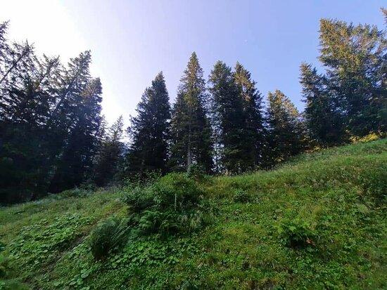 Sonnenalpe Nassfeld Foto