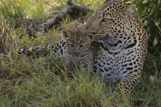 Tarangire National Park, Tanzania: Looking for a unique safari experience? Africa Serendipity Safaris offers you flexible, affordable and customized safaris in Tanzania
