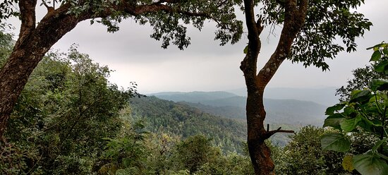 View from the forest clearing