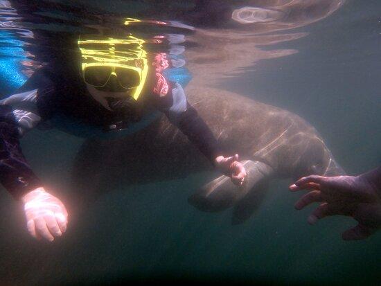 Crystal River Manatee Swim in Kings Bay National Wildlife Refuge Photo