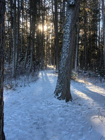 Further up and around Whitefish- Hiking trail close by