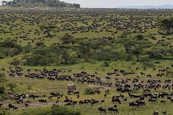 Jairos Adventures: Serengeti, Ngorongoro and Tarangire safaries,  Mt kilimanjaro climbing